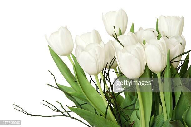 Seitenansicht der Strauß mit weißen Tulpen, isoliert, führen zu einer Fragmentierung