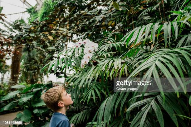 side view of boy looking at butterfly on plant at greenhouse - 植物園 ストックフォトと画像