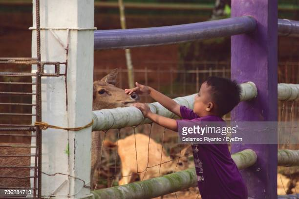 Side View Of Boy Stroking Deer While Standing By Fence In Zoo