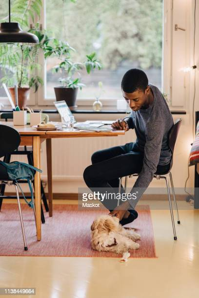 Side view of boy stroking dog while studying at table against window in living room