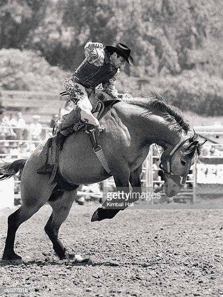 side view of bronco buster, horse leaping - bronco stadium stock pictures, royalty-free photos & images