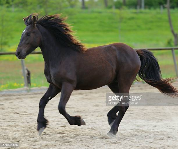 Side View Of Brown Horse Running In Ranch