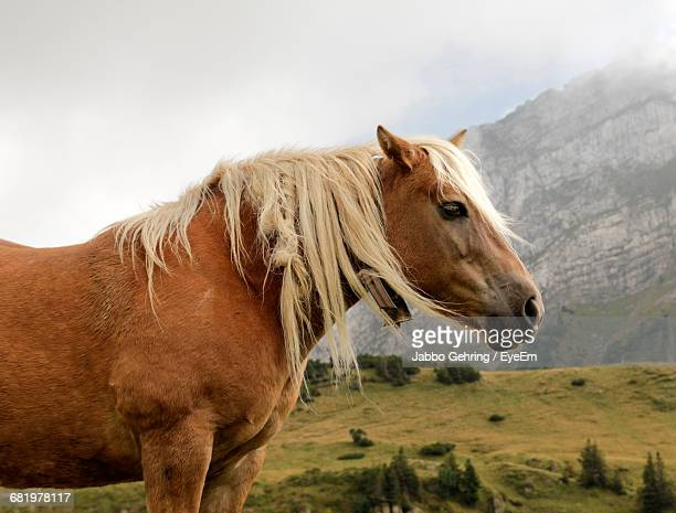 Side View Of Brown Horse Standing Against Mountain