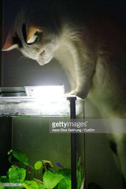 Magnificent 60 Top Cat In Fish Tank Pictures Photos Images Getty Download Free Architecture Designs Rallybritishbridgeorg