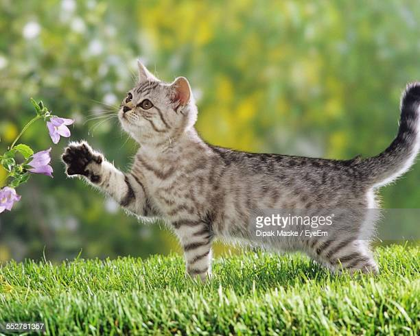 Side View Of Cat Playing With Flower Plant In Park