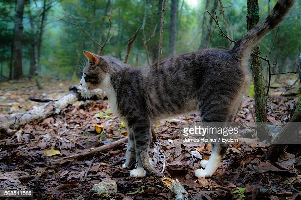 Side View Of Cat Standing On Ground Against Trees In Forest