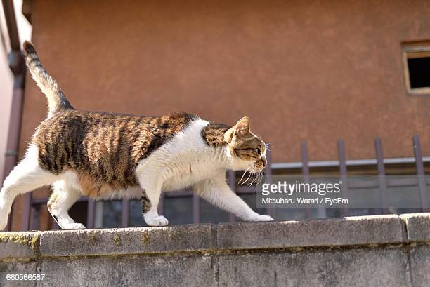 Side View Of Cat Walking On Wall