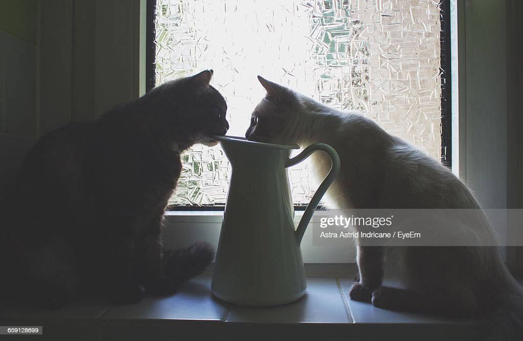 Side View Of Cats Sitting With Jug On Window Sill At Home Stock Photo