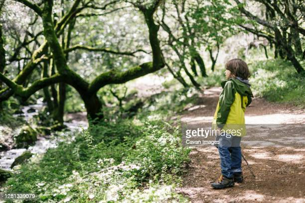 side view of child looking away by forest - petaluma stock pictures, royalty-free photos & images