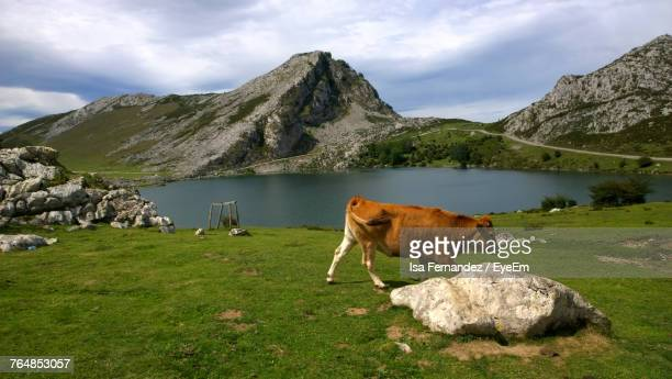Side View Of Cow Walking On Grassy Field By Lake Against Sky