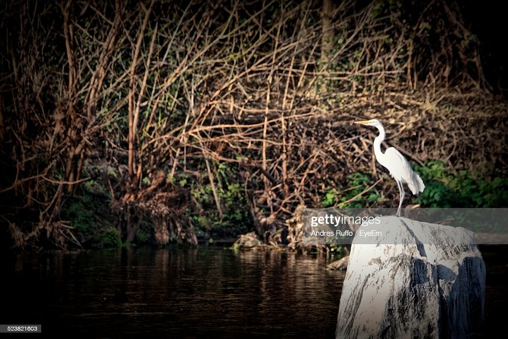 Side View Of Crane On Rock In River : Stock Photo