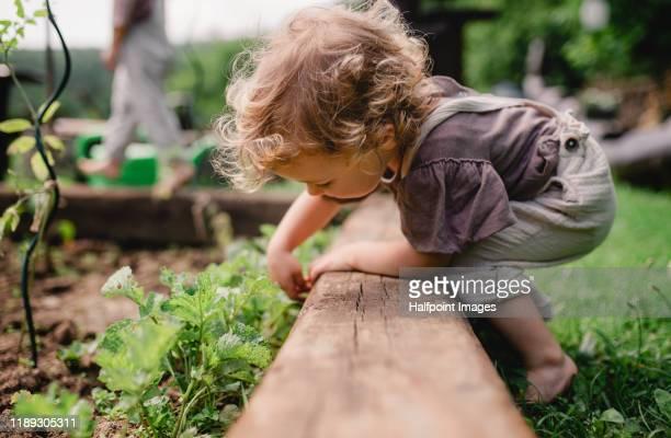 a side view of cute small child outdoors gardening. - umweltschutz stock-fotos und bilder