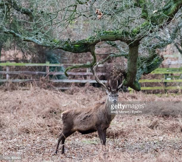 side view of deer standing on field - herbivorous stock pictures, royalty-free photos & images