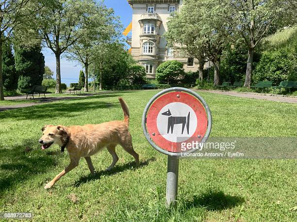 Side View Of Dog By Warning Sign On Grassy Field On Sunny Day