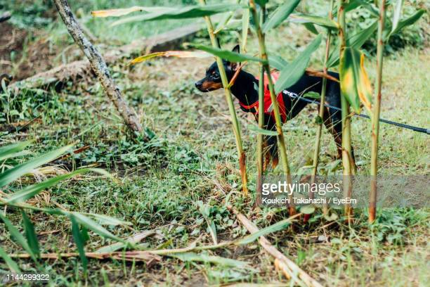 Side View Of Dog Standing By Plants On Field