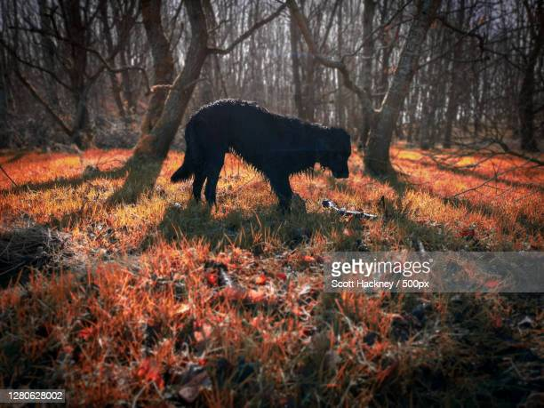 side view of dog standing on field during autumn, stirling, scotland, united kingdom - central scotland stock pictures, royalty-free photos & images
