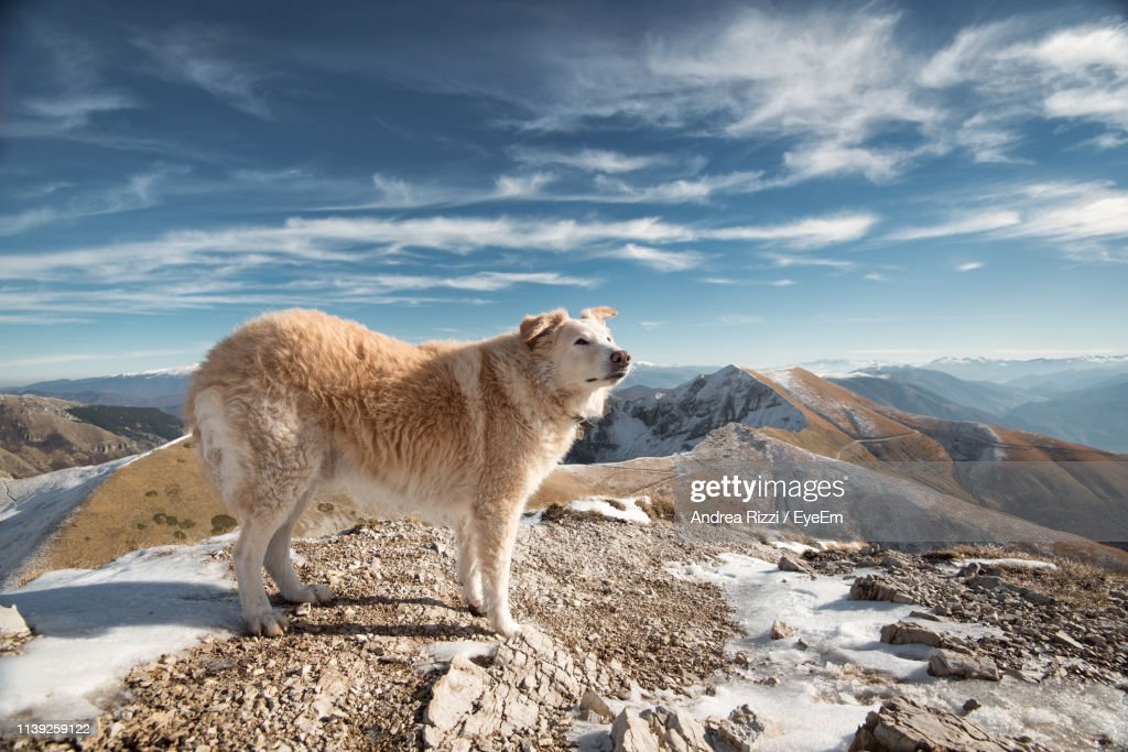Side View Of Dog Standing On Mountain Against Sky : Foto stock