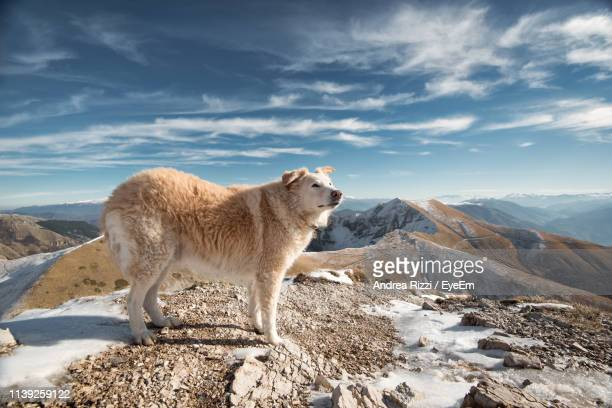 side view of dog standing on mountain against sky - andrea rizzi fotografías e imágenes de stock