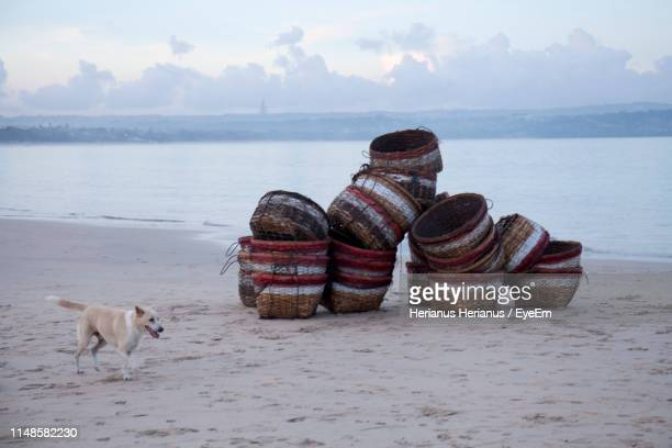 Side View Of Dog Walking At Beach By Stacked Wicker Baskets