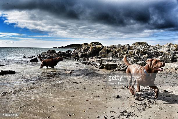Side view of dogs walking on beach