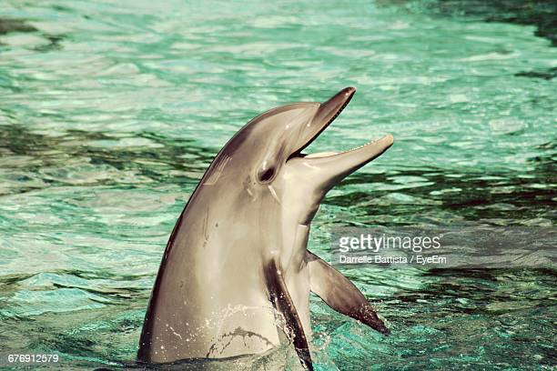 Side View Of Dolphin Swimming In Sea