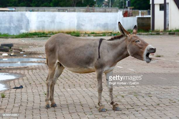 side view of donkey standing on street - donkey stock pictures, royalty-free photos & images
