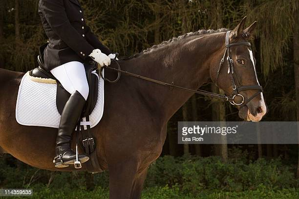 side view of dressage horse with rider