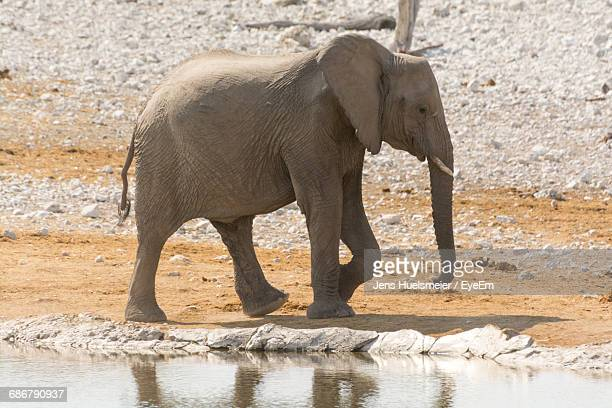 Side View Of Elephant In Nature