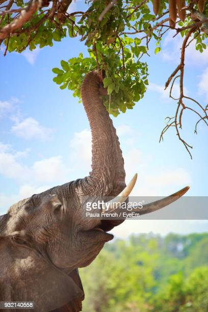 side view of elephant standing against sky - south luangwa national park stock pictures, royalty-free photos & images
