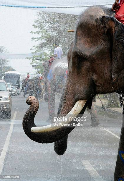 Side View Of Elephant Walking On Street During Songkran