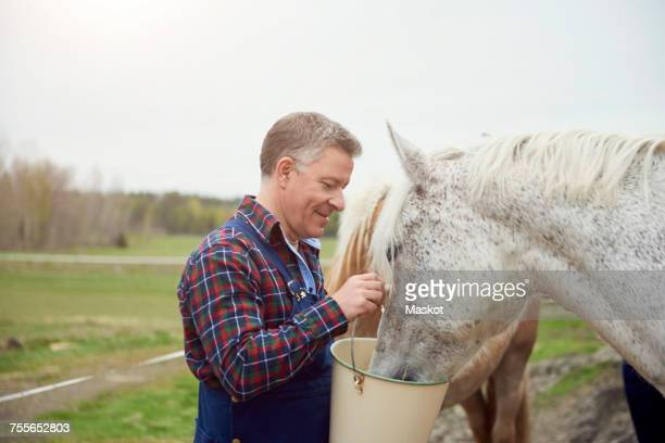 Side view of farmer feeding horse on field
