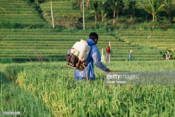 side view of farmer spraying insecticide on crops in farm - crop sprayer stock pictures, royalty-free photos & images