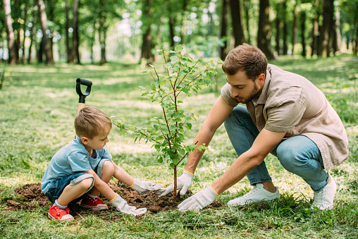 side view of father and son planting tree at park 973325366
