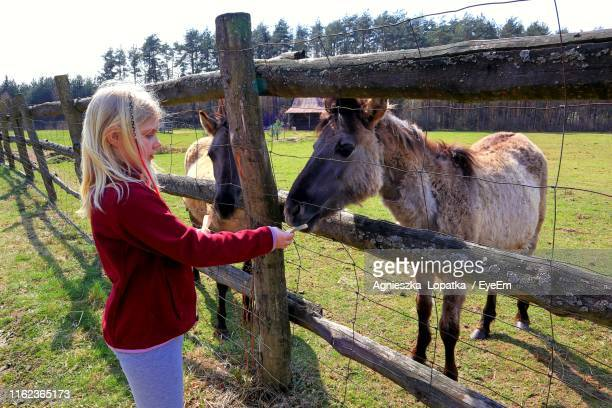 Side View Of Girl Feeding Bread To Horse At Farm