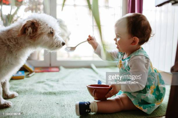 side view of girl feeding dog at home - feeding stock pictures, royalty-free photos & images