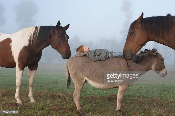 Side view of girl lying on donkey amidst horses on field