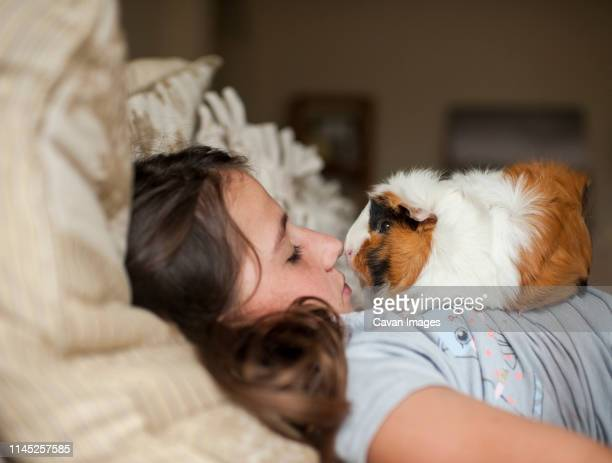 side view of girl with guinea pig lying on bed at home - guinea pig stock pictures, royalty-free photos & images