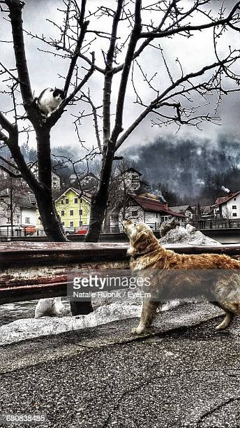 Side View Of Golden Retriever Looking At Cat On Bare Tree In Winter