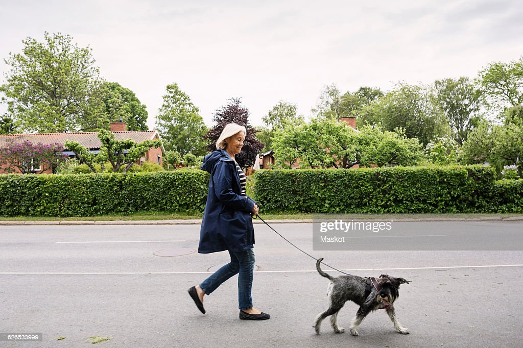 Side view of happy senior woman walking with dog on street : Stockfoto