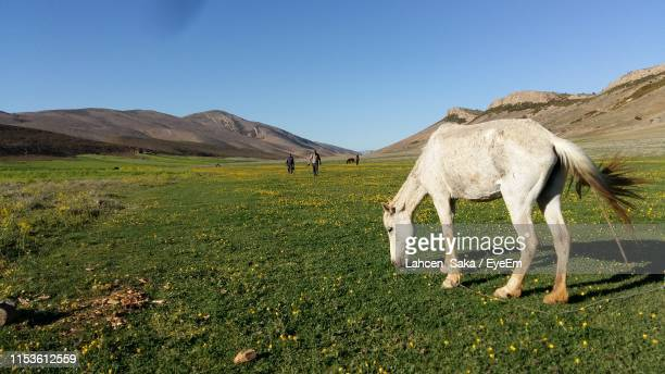 side view of horse grazing on grassy field against clear sky - saka stock pictures, royalty-free photos & images