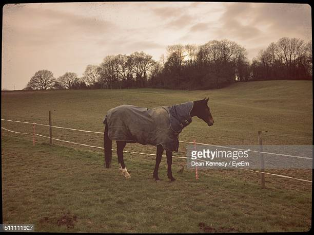 Side view of horse in pasture