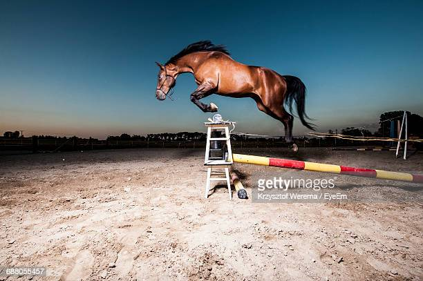 side view of horse jumping over hurdle against blue sky - hurdling horse racing stock pictures, royalty-free photos & images