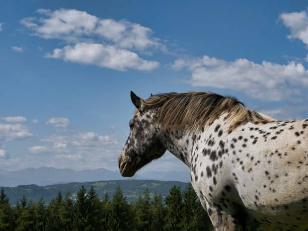 Side View Of Horse On Mountain Against Sky
