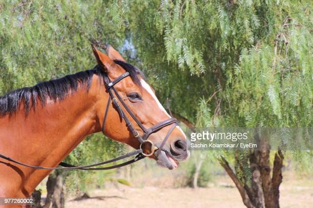 side view of horse standing against trees - 馬具 ストックフォトと画像
