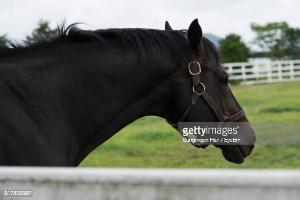 Side View Of Horse Standing At Barn