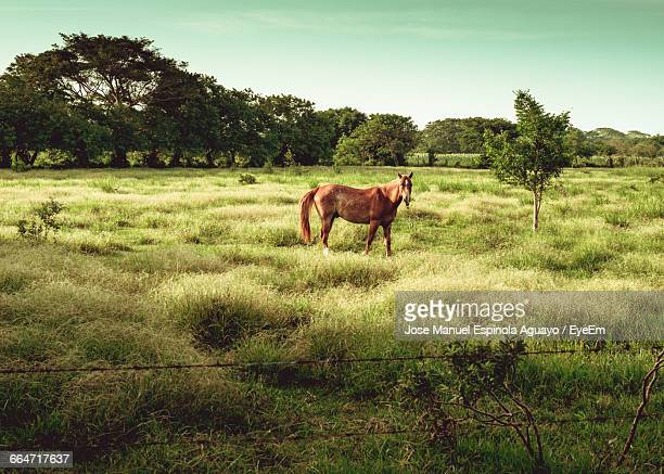 Side View Of Horse Standing On Grass Against Clear Sky