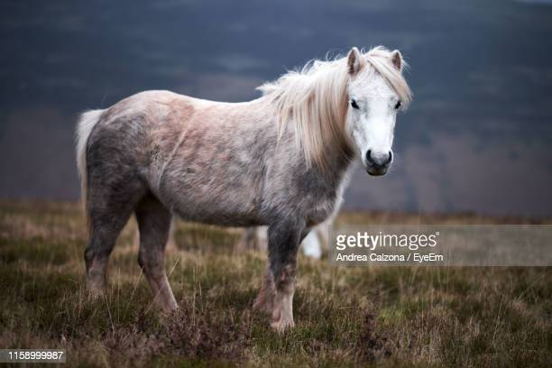 side view of horse standing on grass - herbivorous stock photos and pictures