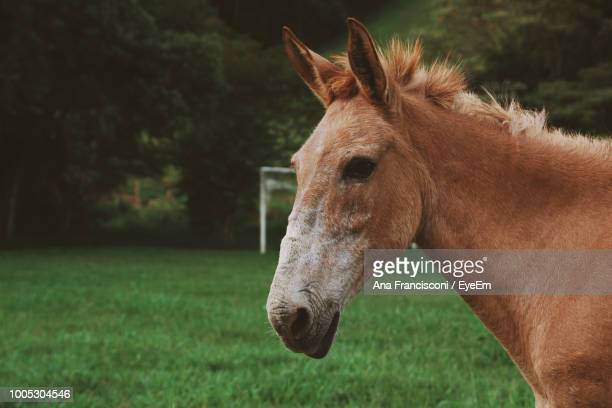 Side View Of Horse Standing On Grassy Field