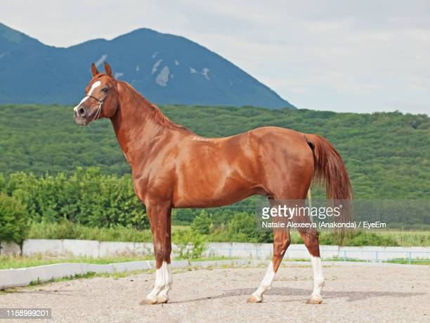 side view of horse standing on land against cloudy sky - horse stock pictures, royalty-free photos & images