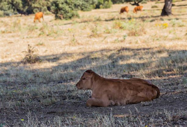 Side view of lion sitting on grassy field,Valdeobispo,Extremadura,Spain